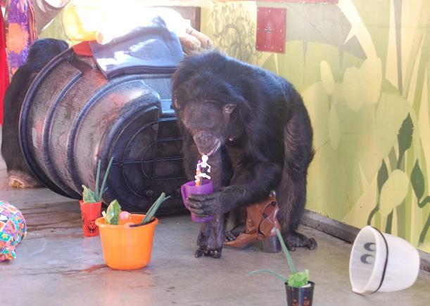 Jamie drinking juice with a straw