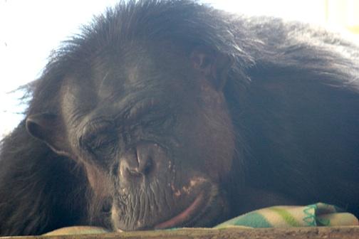 Negra protruding lip sleep