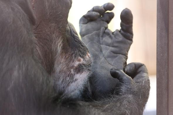 web_Missy_lick_jody_foot_wound_groom_GH_jb_IMG_0820