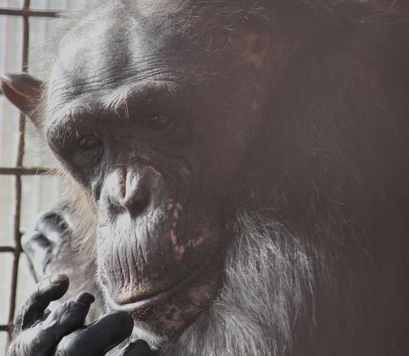 web_Negra_closeup_face_inspect_fingers_GH_kh_IMG_5264