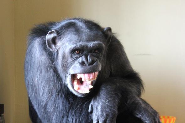 web_foxie_yawn_teeth_kd_IMG_5543