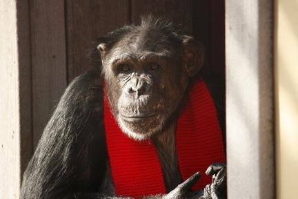 3-21-09-scarf-1