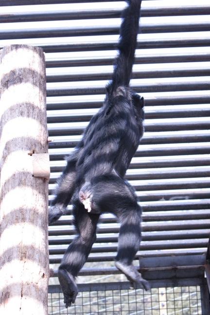 foxie-acrobatics-1