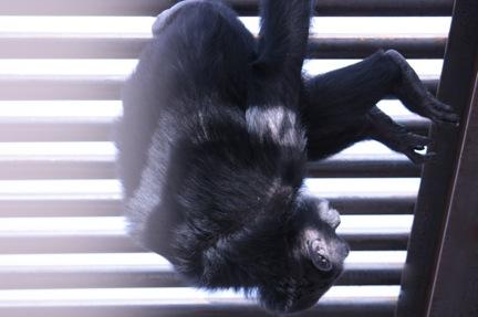foxie-acrobatics-3