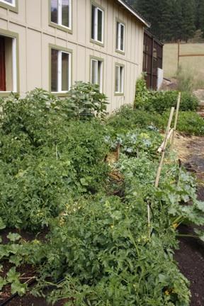 web-garden-july-24-volunteer-work-party_mg_2835