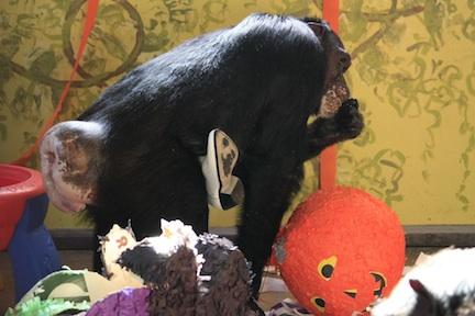 jamie-halloween-jamies-birthday-enrichment_mg_47671