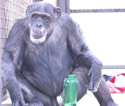Missy_green bottle outside cropped MG_9376