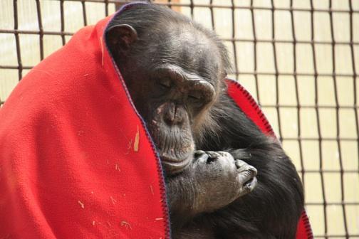 Negra red blanket over shoulders