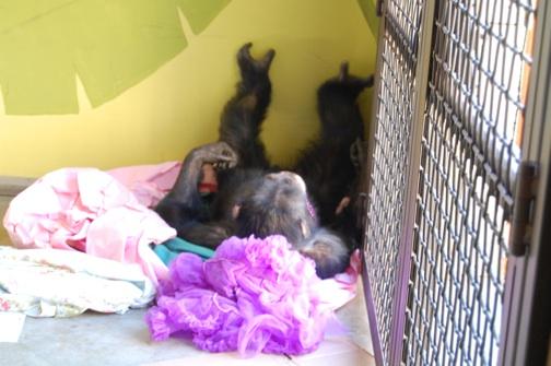 web Burrito nest paper tutu playroom DSC_0069