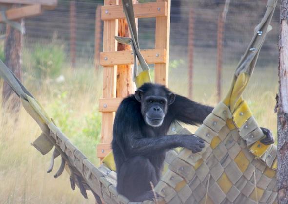 annie in hammock