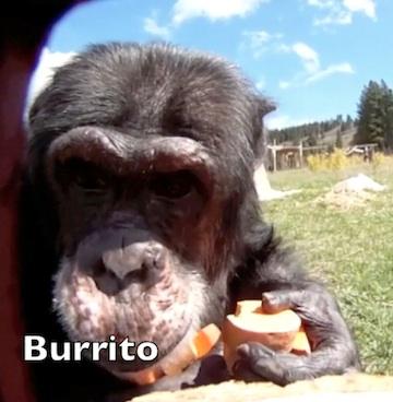 burrito face in camera