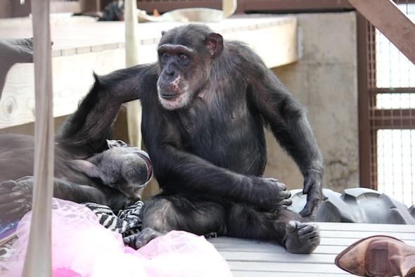 Annie grooming Missy