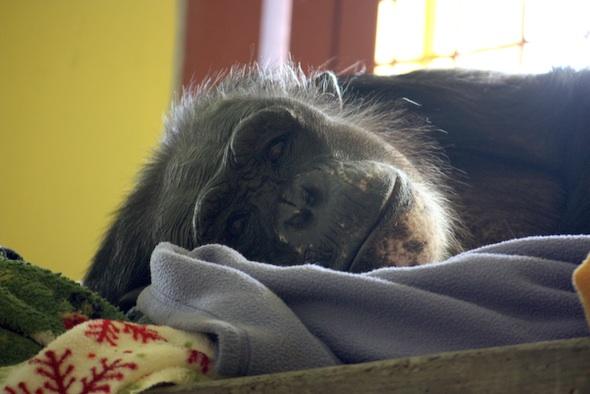 web negra nest sleep cute close up window PR IMG_9580