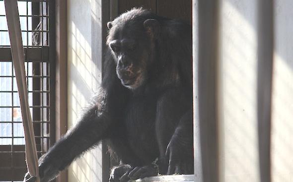 missy sit window sill