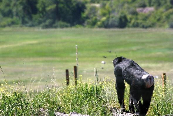 web Jamie YH view of valley below_MG_4302