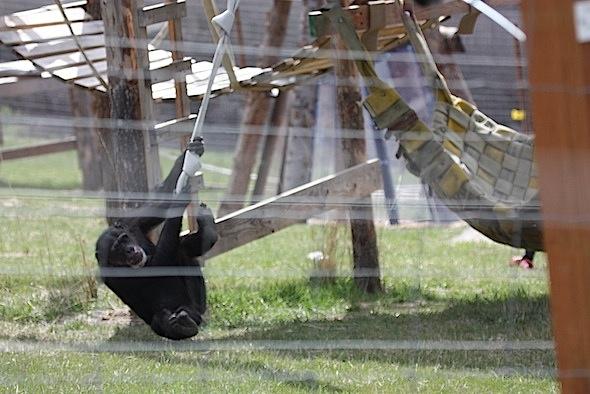 web Missy swing fire hose YH B IMG_1539
