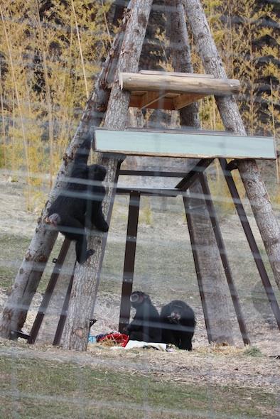 web jamie climbing yh cabin sign jody burrito