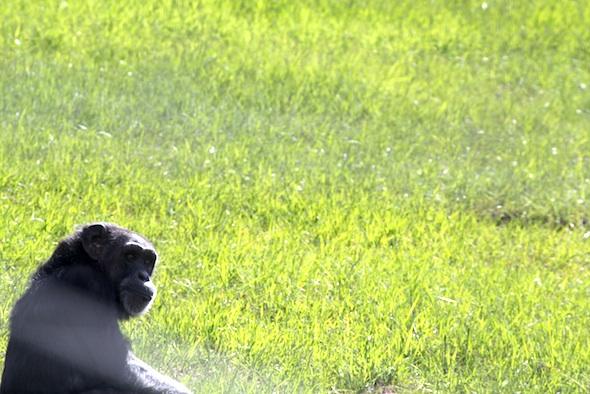 web jody green grass YH IMG_6979