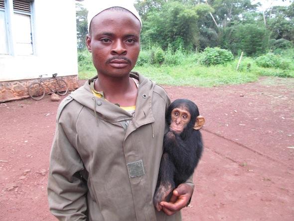 3 orphan chimp Congo