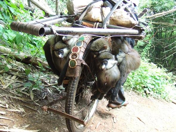 MonkeysBike