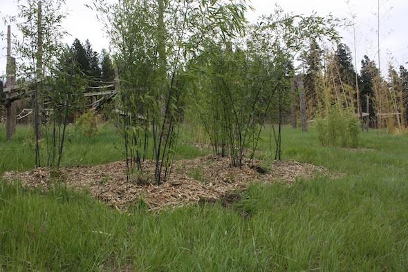 web Black bamboo grove YH IMG_2030