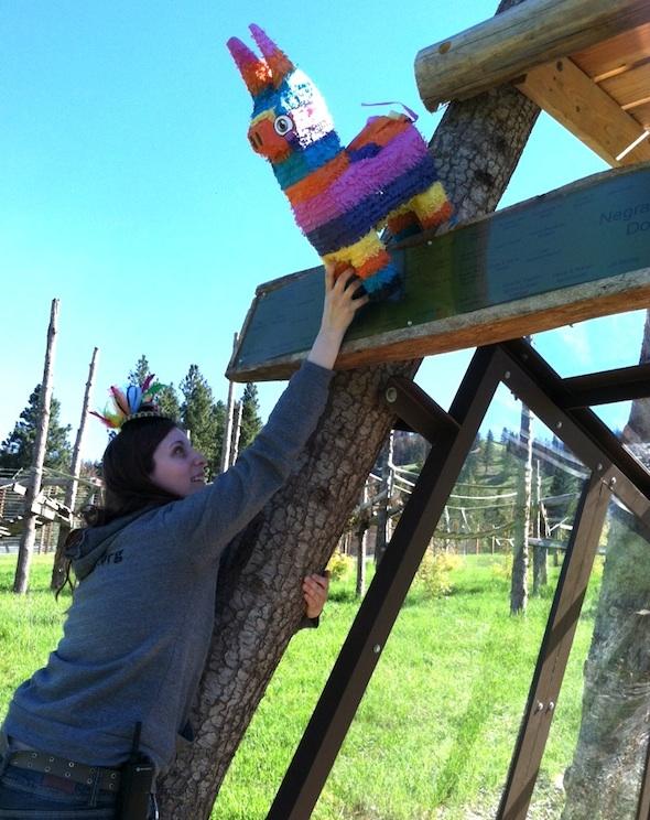 web Debbie caregiver fancy headband pinata Negra's cabin cinco de mayo party Young's Hill YH IMG_6510