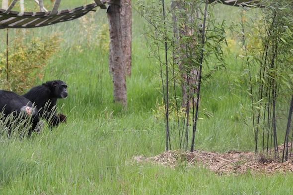 web Foxie suspicious of bamboo dora annie YH IMG_8312