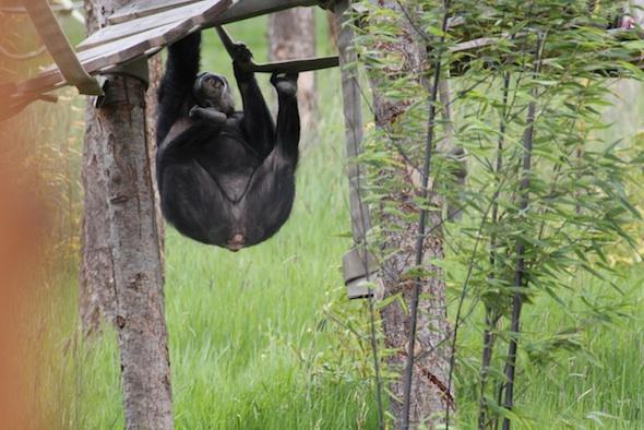 web Negra climb onto shakey bridge YH IMG_8359