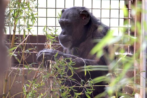 web jody nest in bamboo GH (dm) IMG_8128