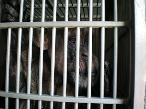 web Jody transfer cage 100_0155