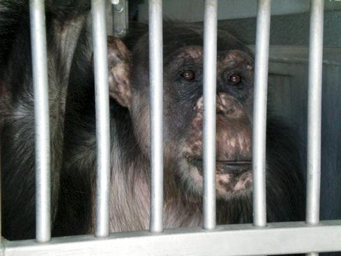 web Negra transfer cage 100_0162