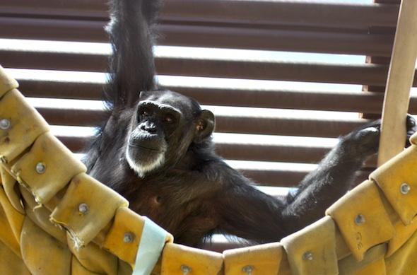 web_fb_foxie_swing_hammock_GH_dm_IMG_2785