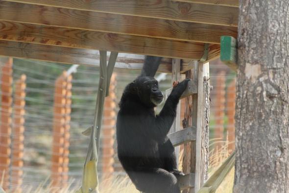 web_Foxie_climb_ladder_hold_troll_look_up_birthday_YH_ek_IMG_1056