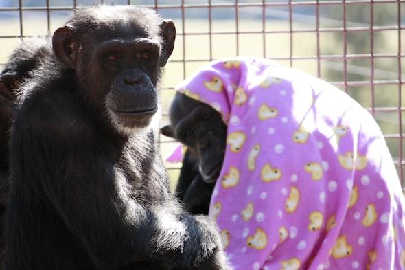 web Foxie on deck outside, Negra in blanket in background