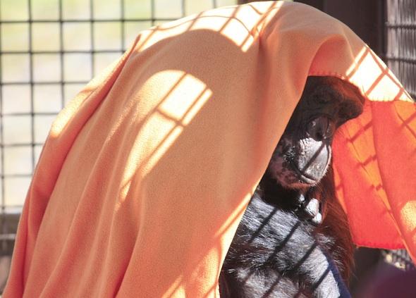 web Negra blanket head OA_MG_7236