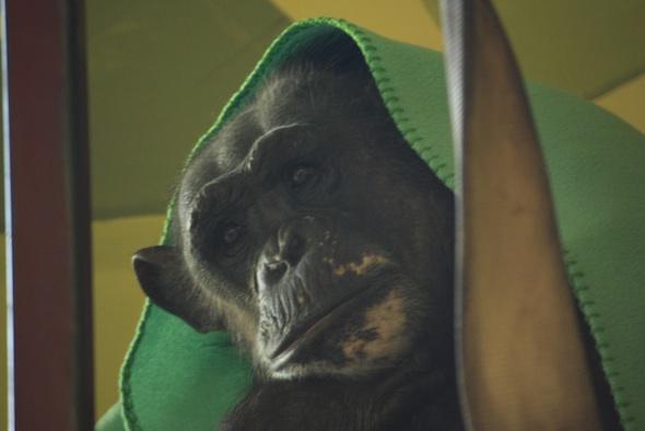 web Negra rest playroom catwalk blanket over head nest_MG_6697