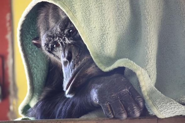 web Negra under green blanket good neggie face nest playroom IMG_9607