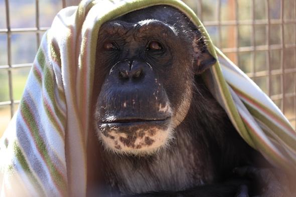 web Negra with blanket on head_MG_2098