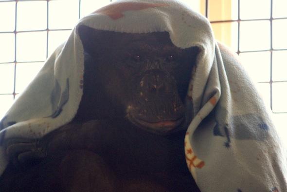 web negra blanket on head bottom lip stick out window catwalk PR IMG_4869