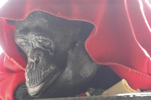web negra eyes closed sleep catwalk lay under red blanket pr _MG_1279