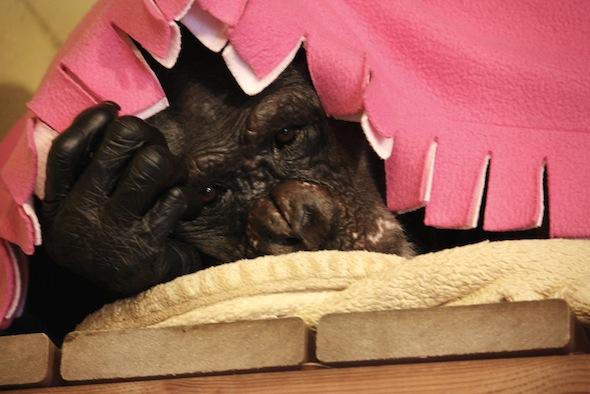 web negra pink blanket with fringe_MG_9111