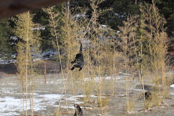 web Missy climb bamboo 11 IMG_9318