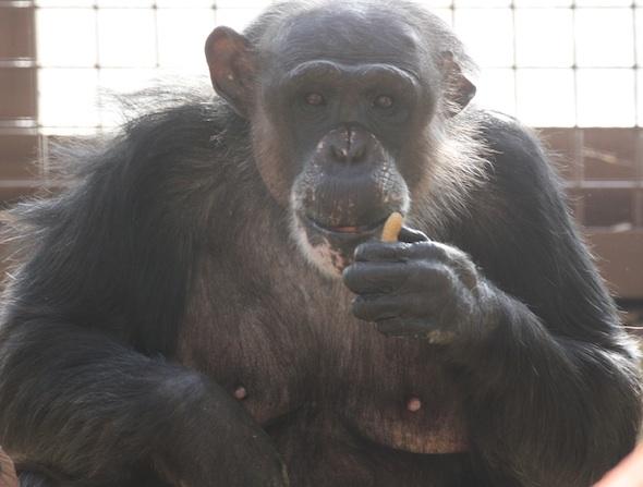 Negra holding peanut
