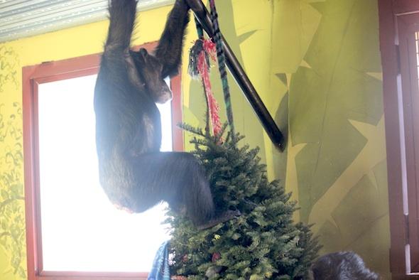 Missy stand xmas tree hanging
