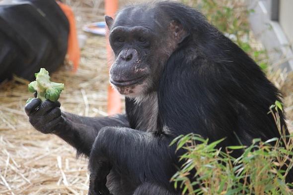 Negra eating brussels
