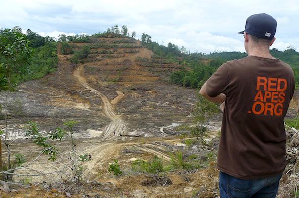 OrangutanOutreach-deforestation-1200w