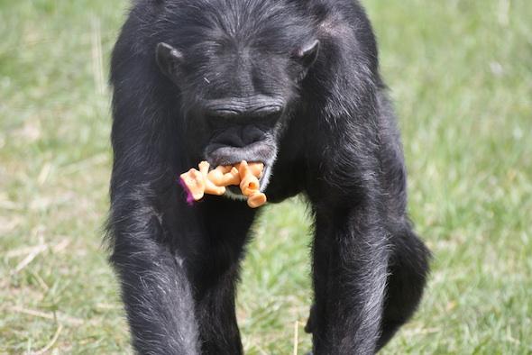 Foxie trolls in mouth 3