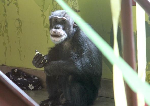 web_burrito_love_chimp_day_look_sweet_ek_IMG_8908
