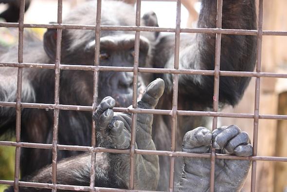 Missy feet on caging
