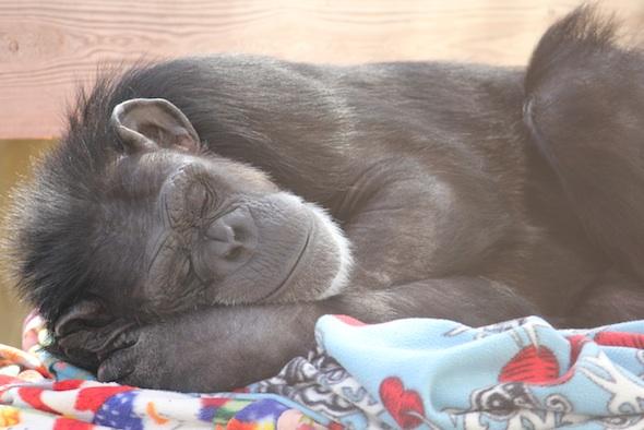 Annie sleeping arm under head
